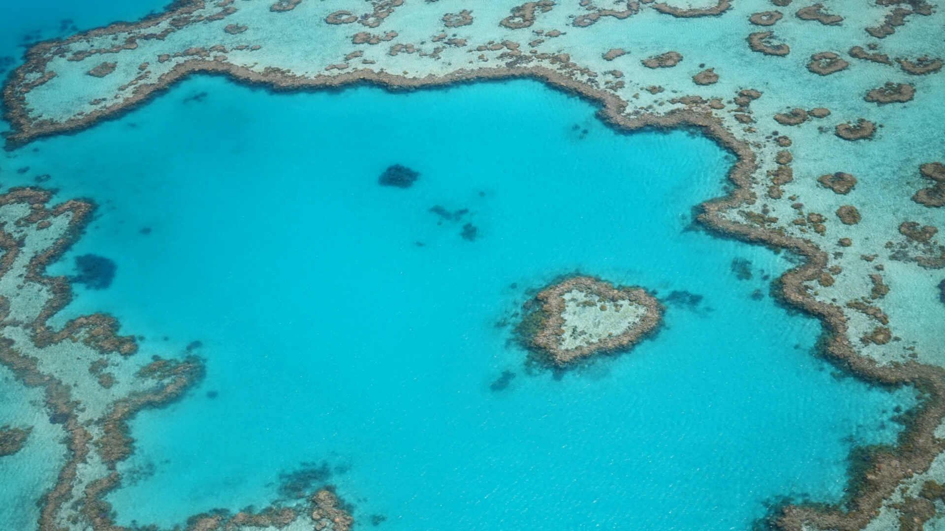 Making A Positive Impact : The Great Barrier Reef